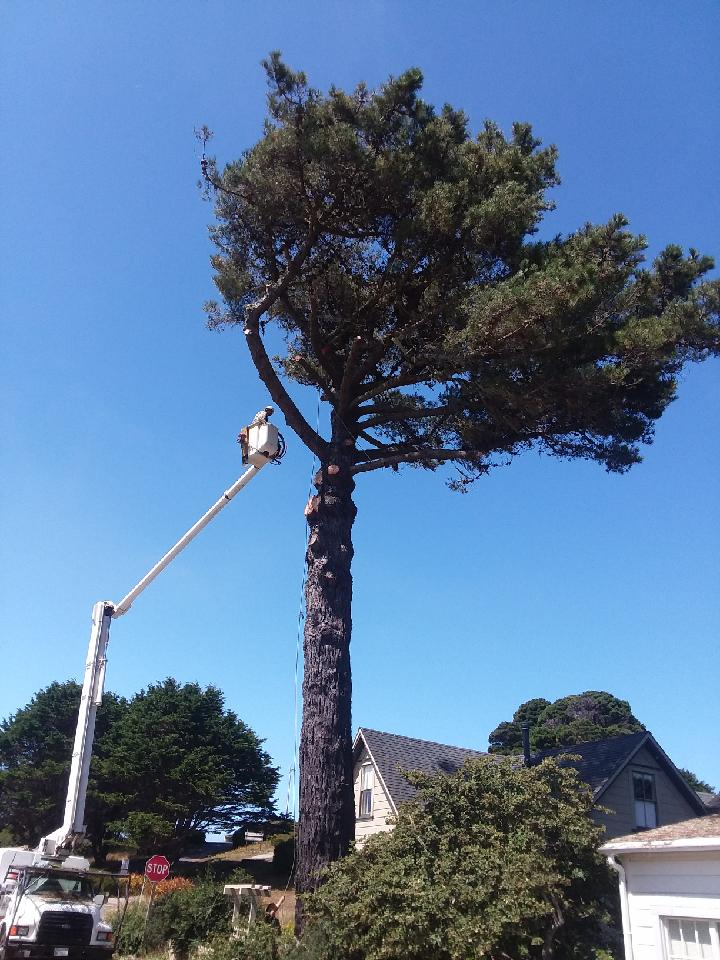 Tree Removal in Action - Tonk's Tree Service